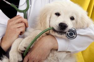 Сколько сейчас стоит кастрировать собаку