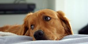 Сколько сейчас стоит усыпить собаку