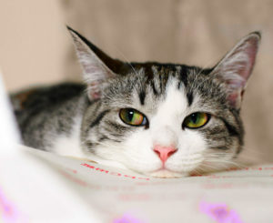 Сколько стоит усыпить кошку, и где это лучше сделать