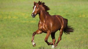 Сколько стоит живая лошадь в рублях