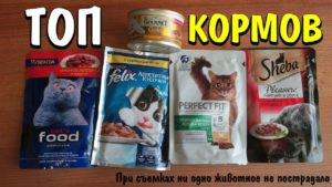 Сколько стоит корм для разных домашних животных